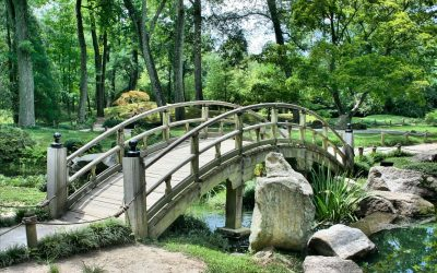 How to Enjoy Botanical Gardens