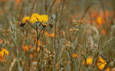 Seed Banks During Drought: How Plants Save During a Recession