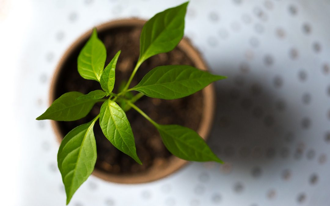 Can We Measure Plant Intelligence? Science Tackles a Question We Didn't Know We Should Ask.