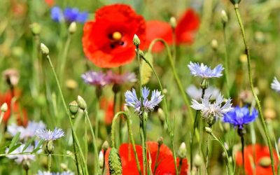 A Guide to Garden Flower Identification