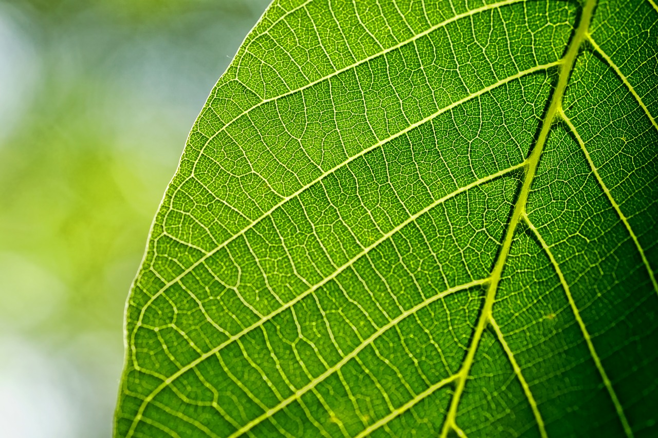What Do Plant Veins and Leaves Actually Do? - PlantSnap