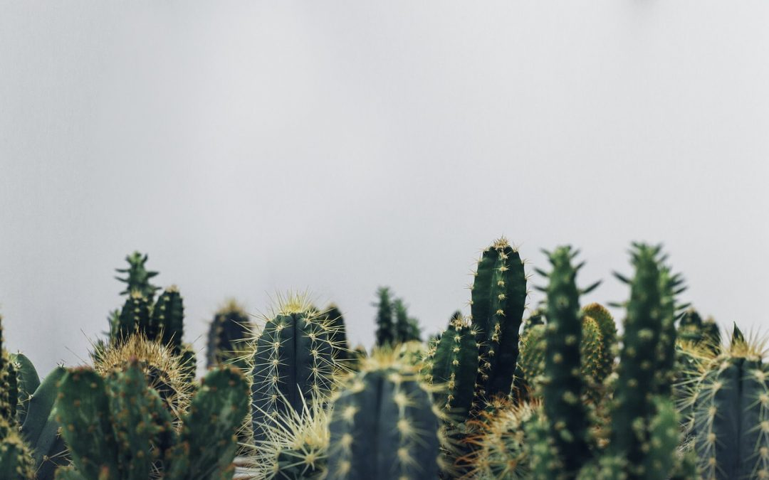 Introduction to Classroom Cactus Identification: Ideas for Educators