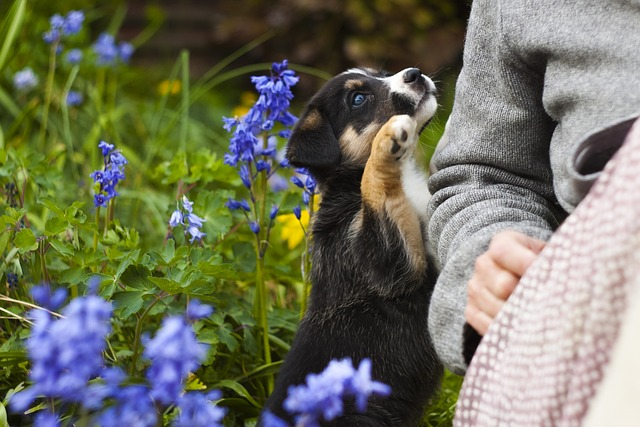 Dog Safe Plants and How to Make a Dog-Friendly Garden