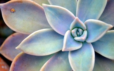 How to Identify Succulents with an App