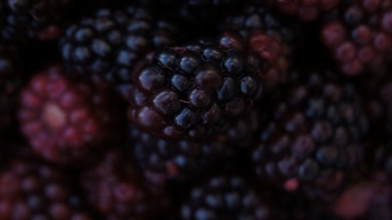 A Slightly Obsessive Guide to the Blackberries of the World