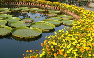 The Best Botanical Gardens in Asia and Oceania