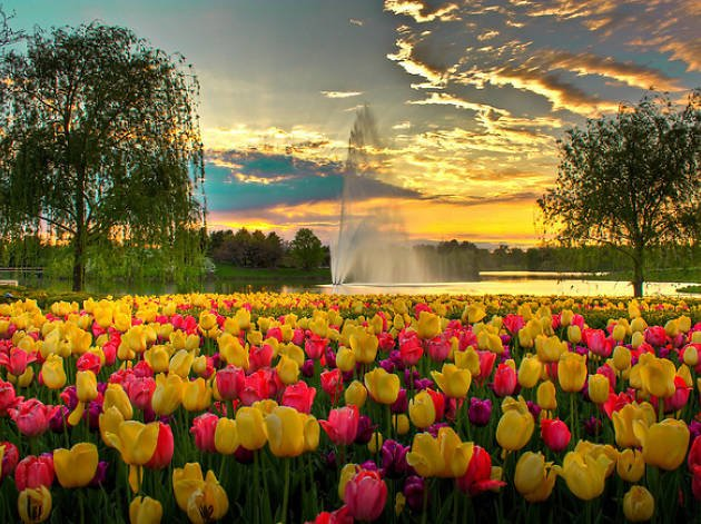 The Best Botanical Gardens in North America