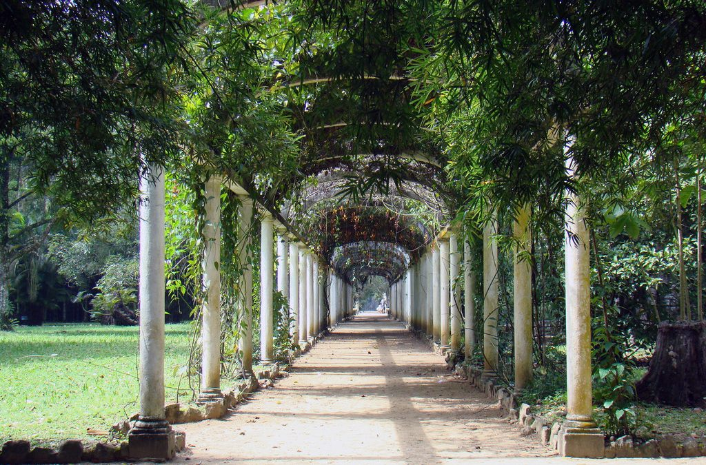 The Best Botanical Gardens of Central and South America