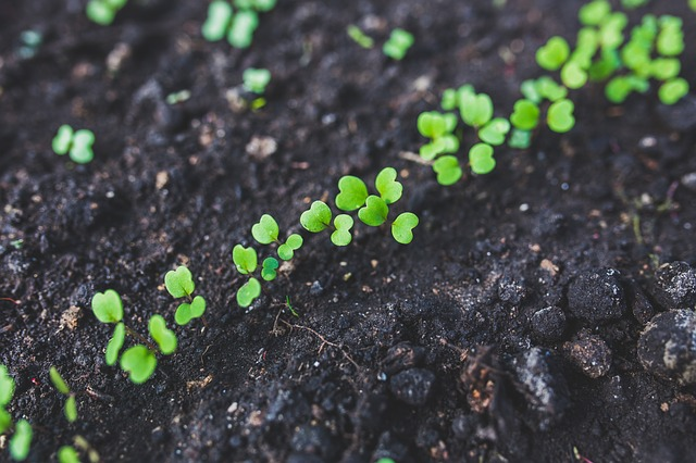 Planning a Last Minute Winter Vegetable Garden