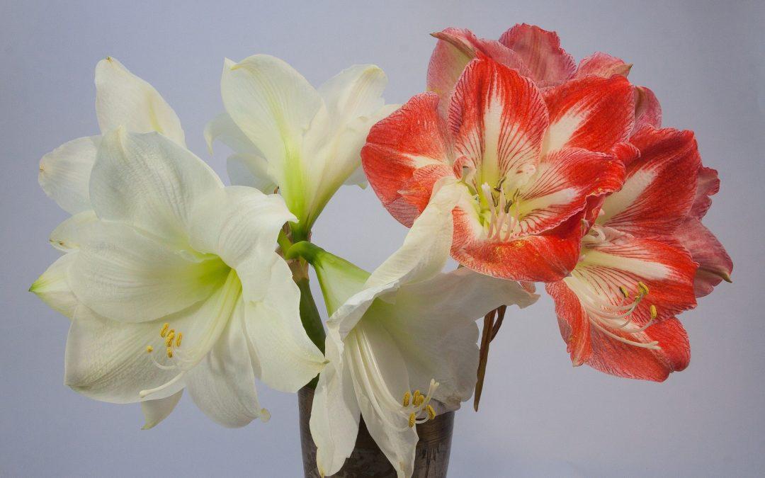 Enjoy These Nine Gorgeous Decorative Christmas Plants: Classic to Chic