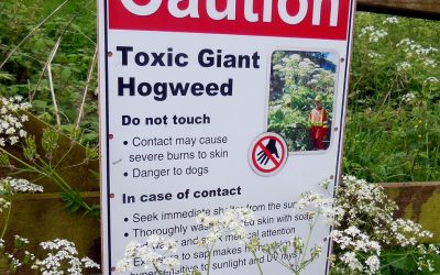 Beyond Giant Hogweed: Plants That Burn or Blister You