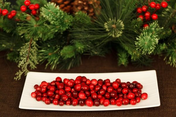 christmas cranberry plant