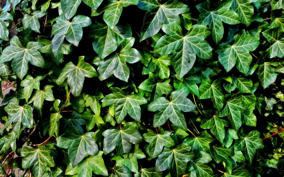 Weekly Roundup – Tropical Trees Head for the Hills, Ants and Plants Partner Up, and More: Plant News for November 10-16, 2018
