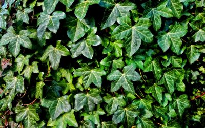 Electric Ink, Using Ferns to Treat Colds, and More: Plant News for November 5-9, 2018