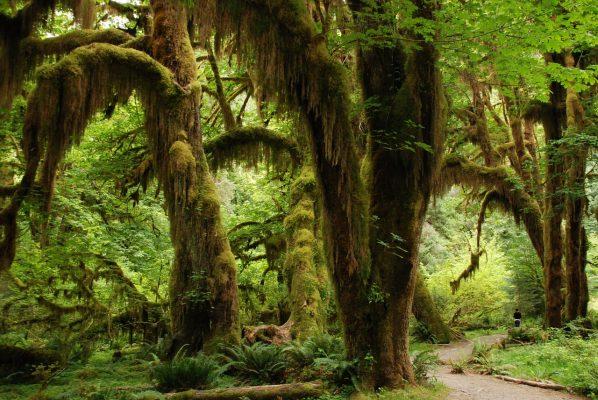 rainforest plants that can burn you