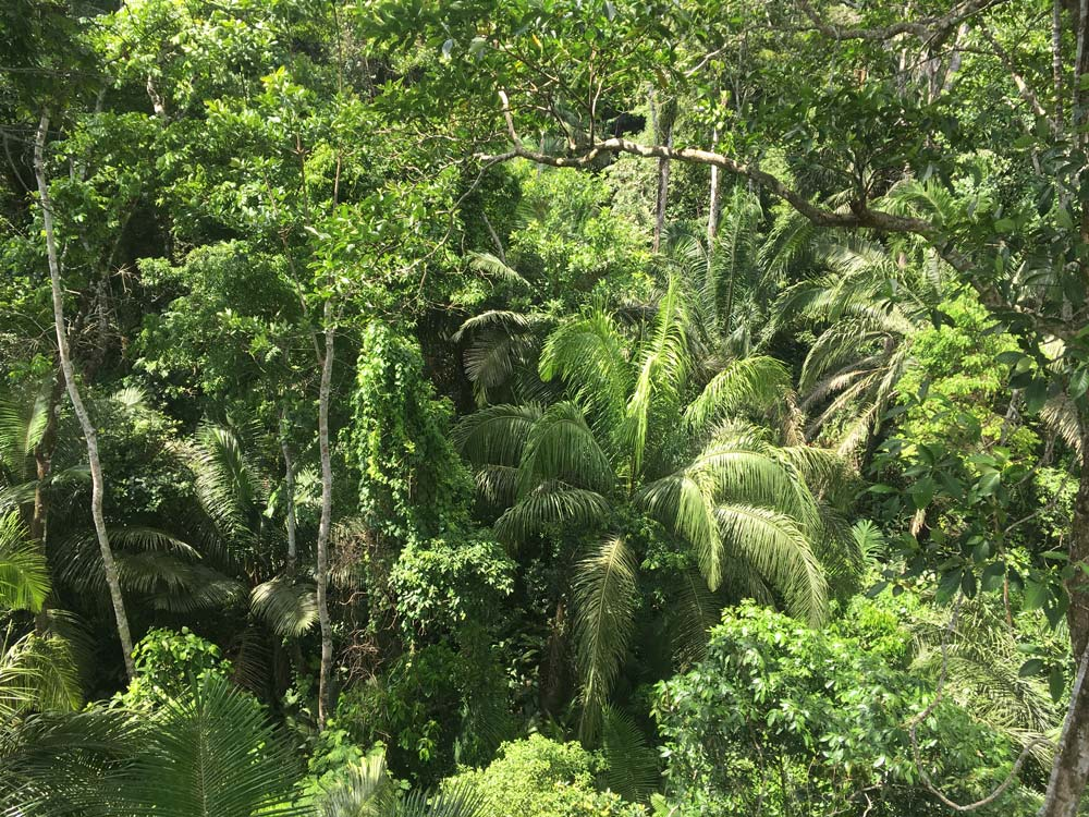 rainforest jungle canopy