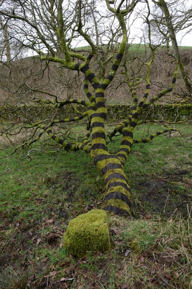 Andy Goldsworthy Moss Tree