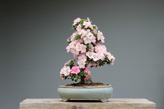bonsai christmas present