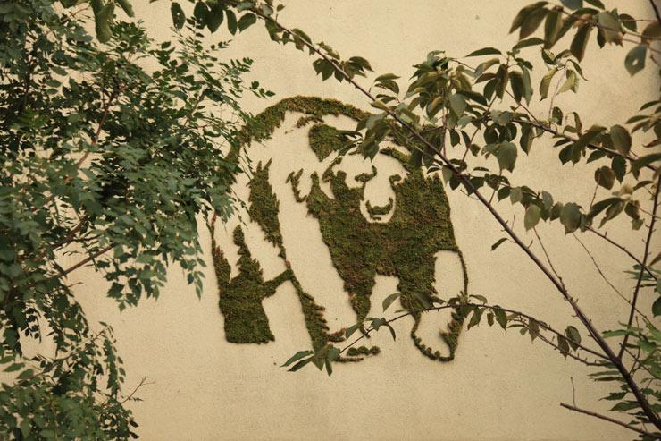 Hugo Rojas Moss Bear