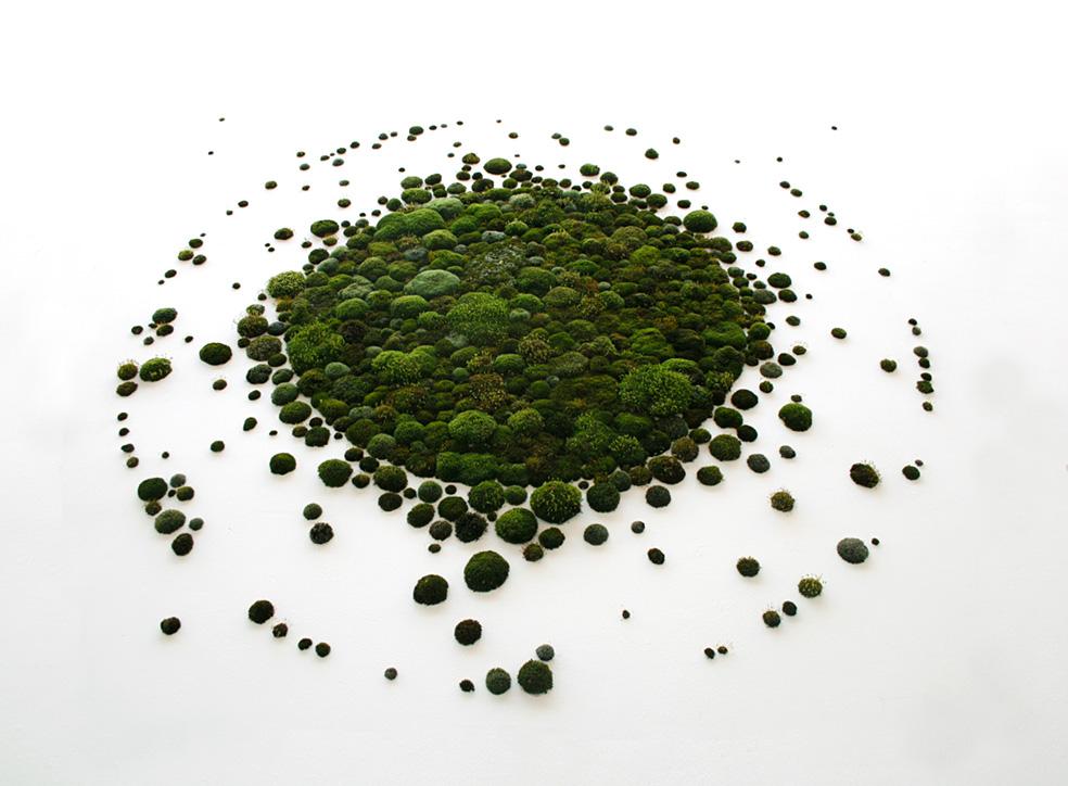 Big Bang Moss