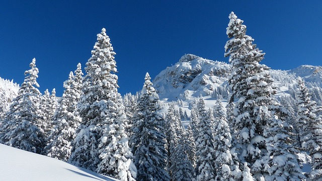 trees snowpack climate change