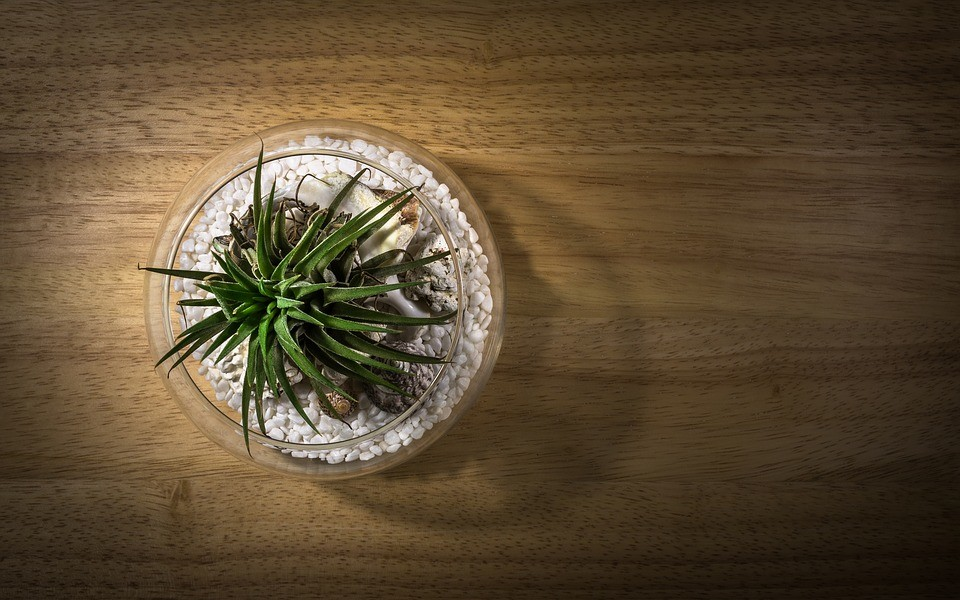 How to Take Care of an Airplant