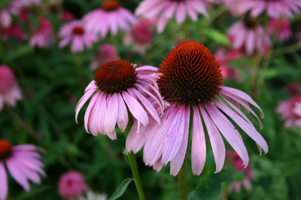 5 Easiest Perennial Flowers to Grow in Your Garden