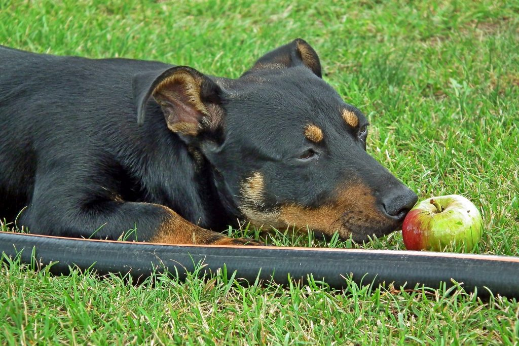 Can Dogs Eat Bananas and Other Fruits?