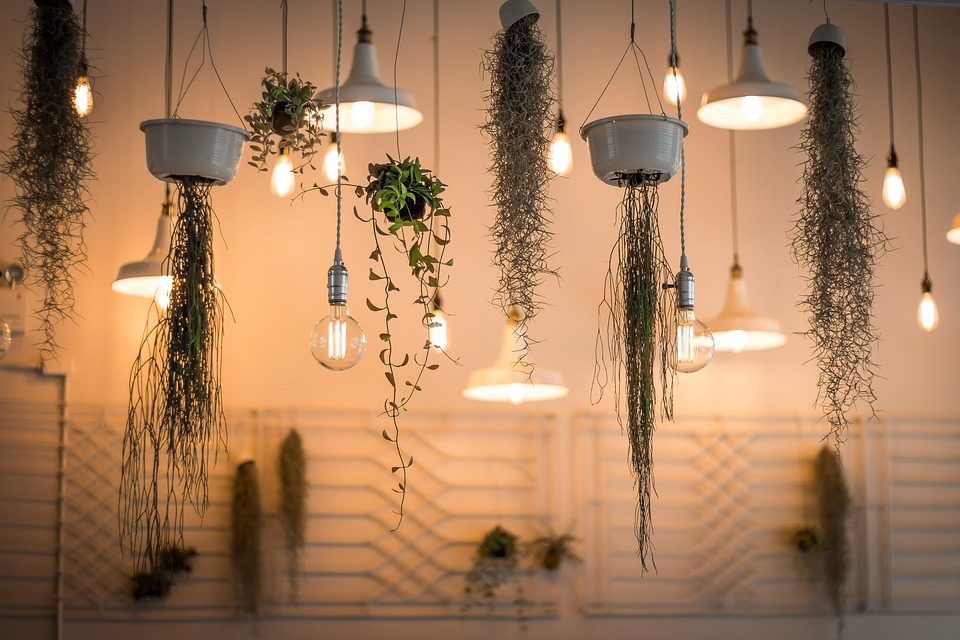 How To Grow Hanging Plants At Home