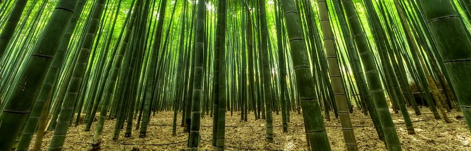 Top 5 Uses For Bamboo Plants