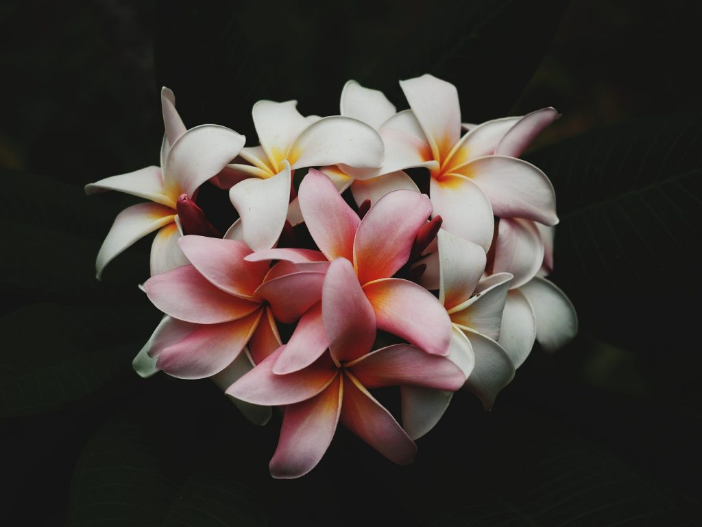 Hawaiian Flower Identification for Beginners