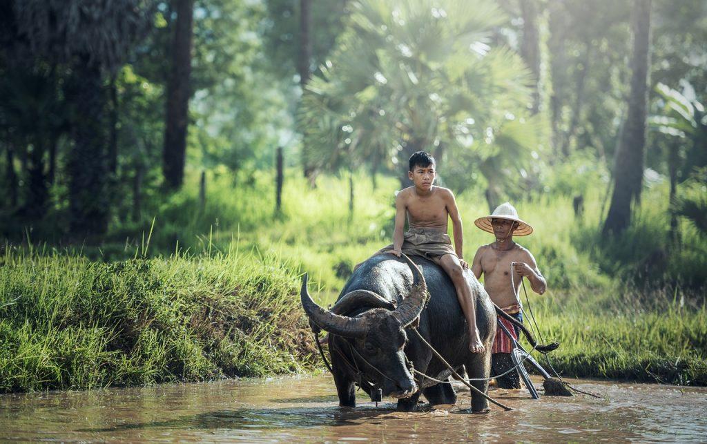 boy riding water buffalo subsistence farming
