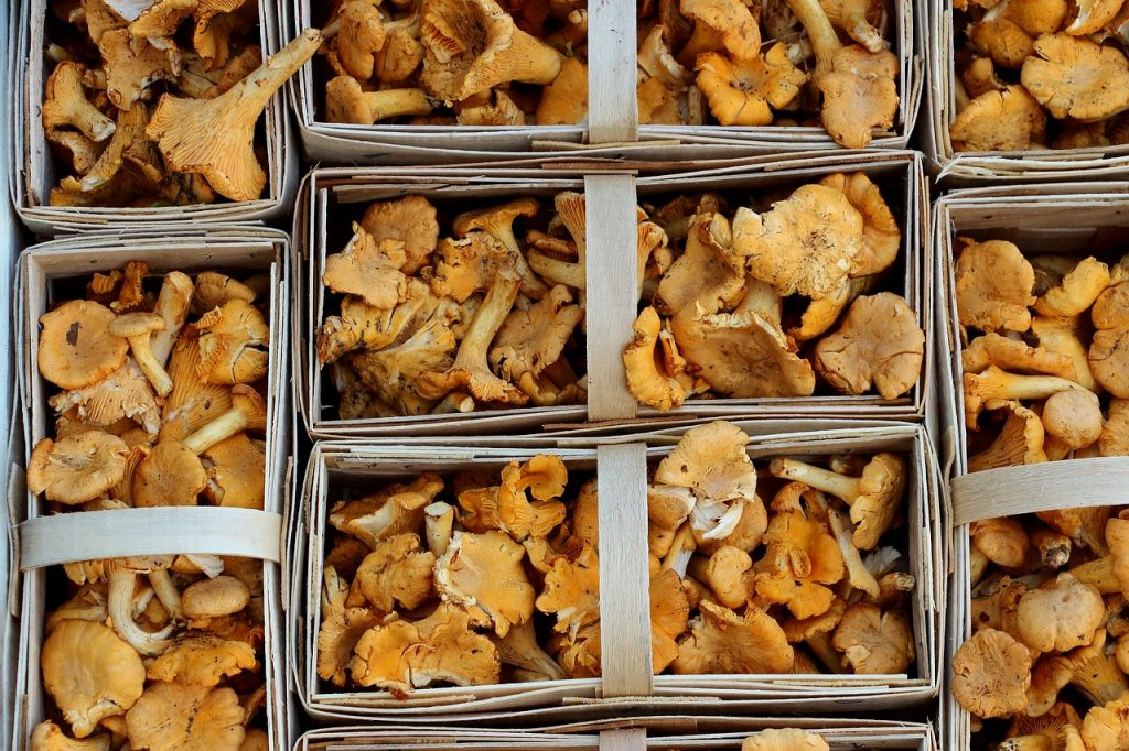 How to Find Chanterelle Mushrooms and Cook with Them