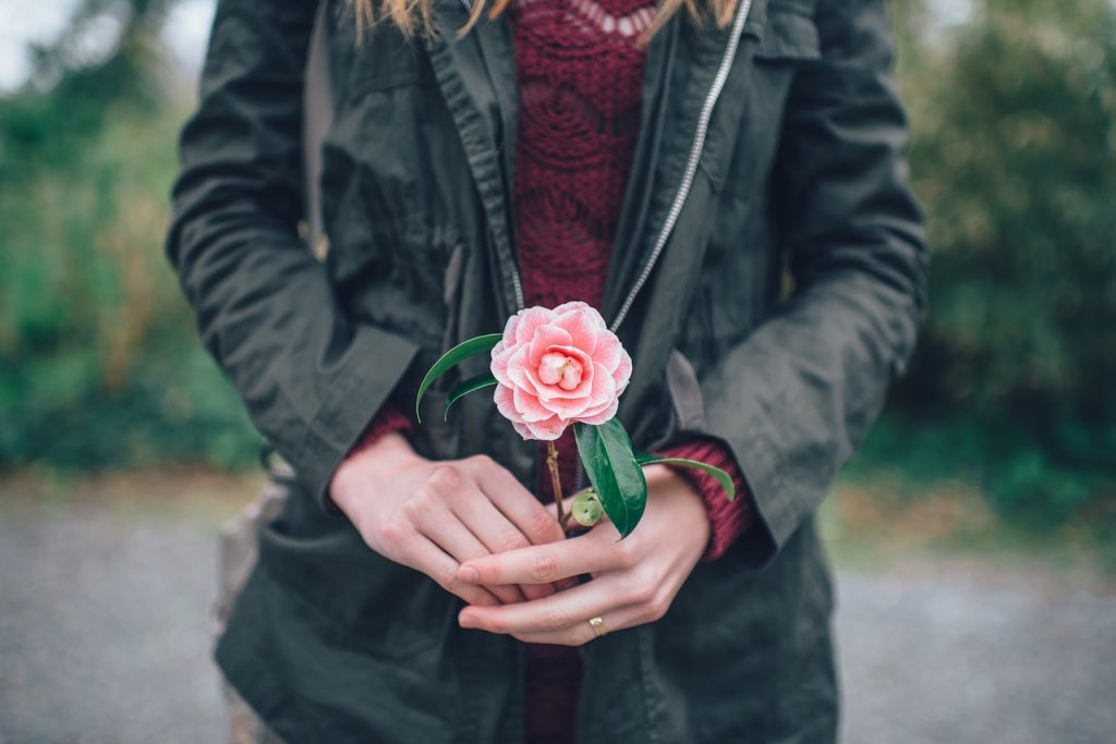 person holding rose flower