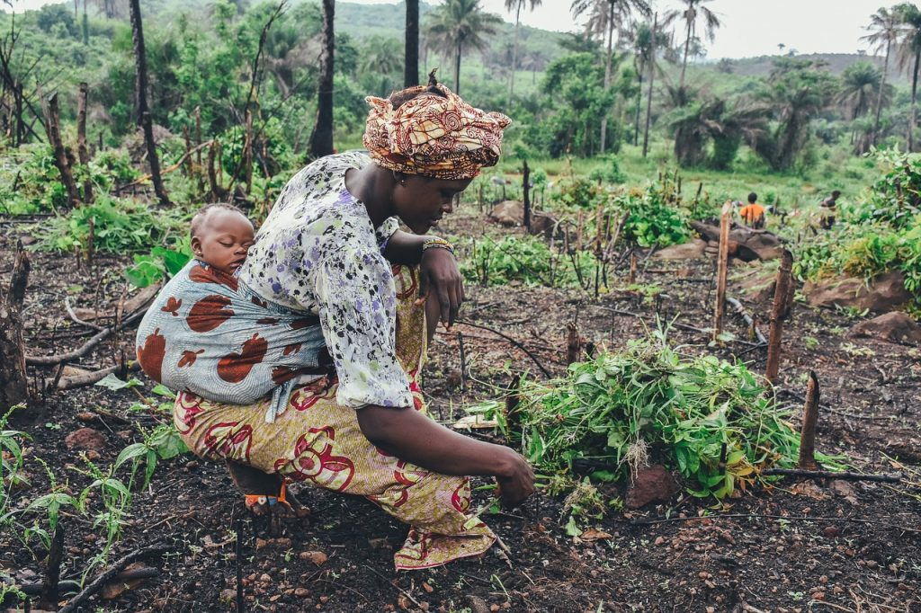 What Is Subsistence Farming?