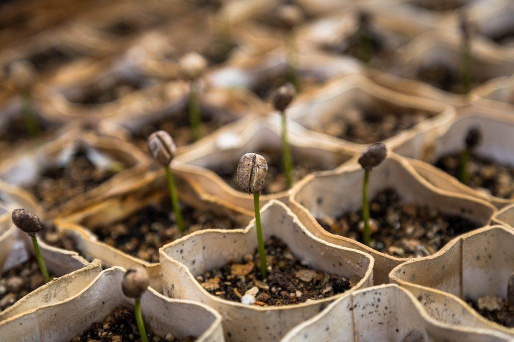 buds, plant nursery