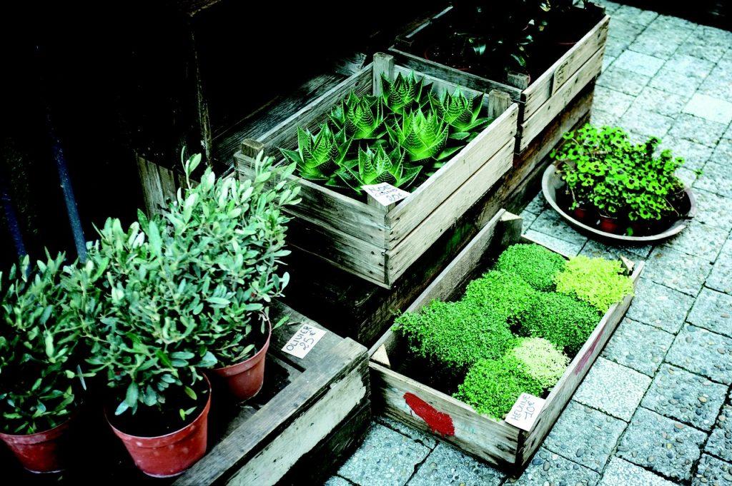flora, plant nursery