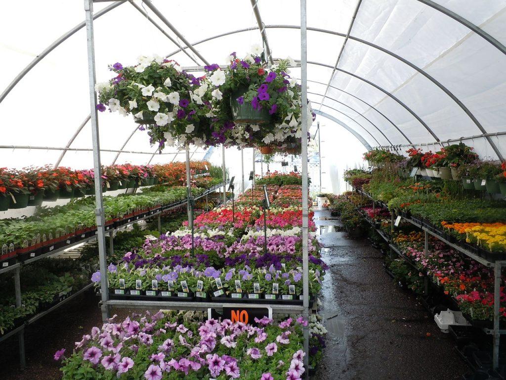 flowers, plant nursery