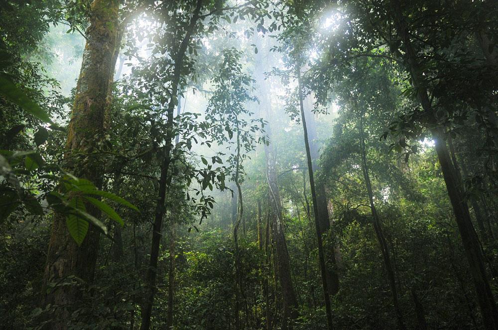 tropical plant identification, jungle, forest, mist