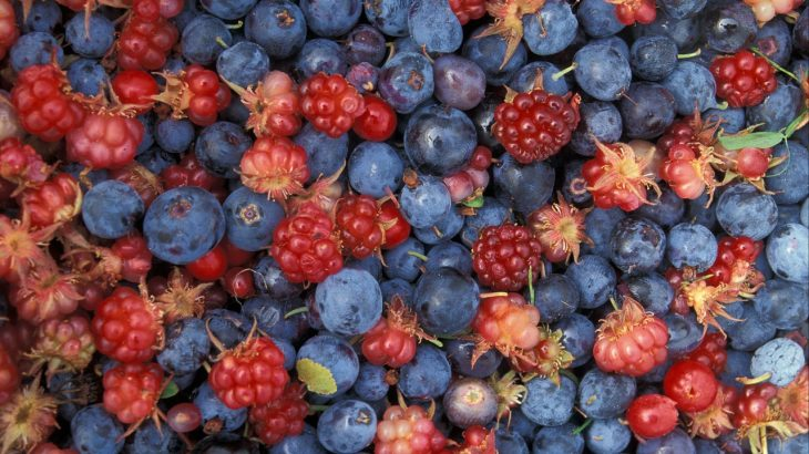 Intro Guide to Identifying Wild Berries