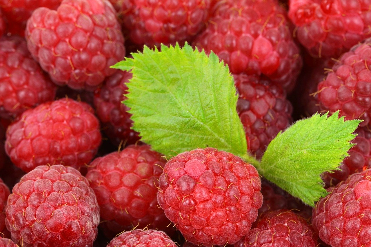 A Slightly Obsessive Guide to Raspberry Identification