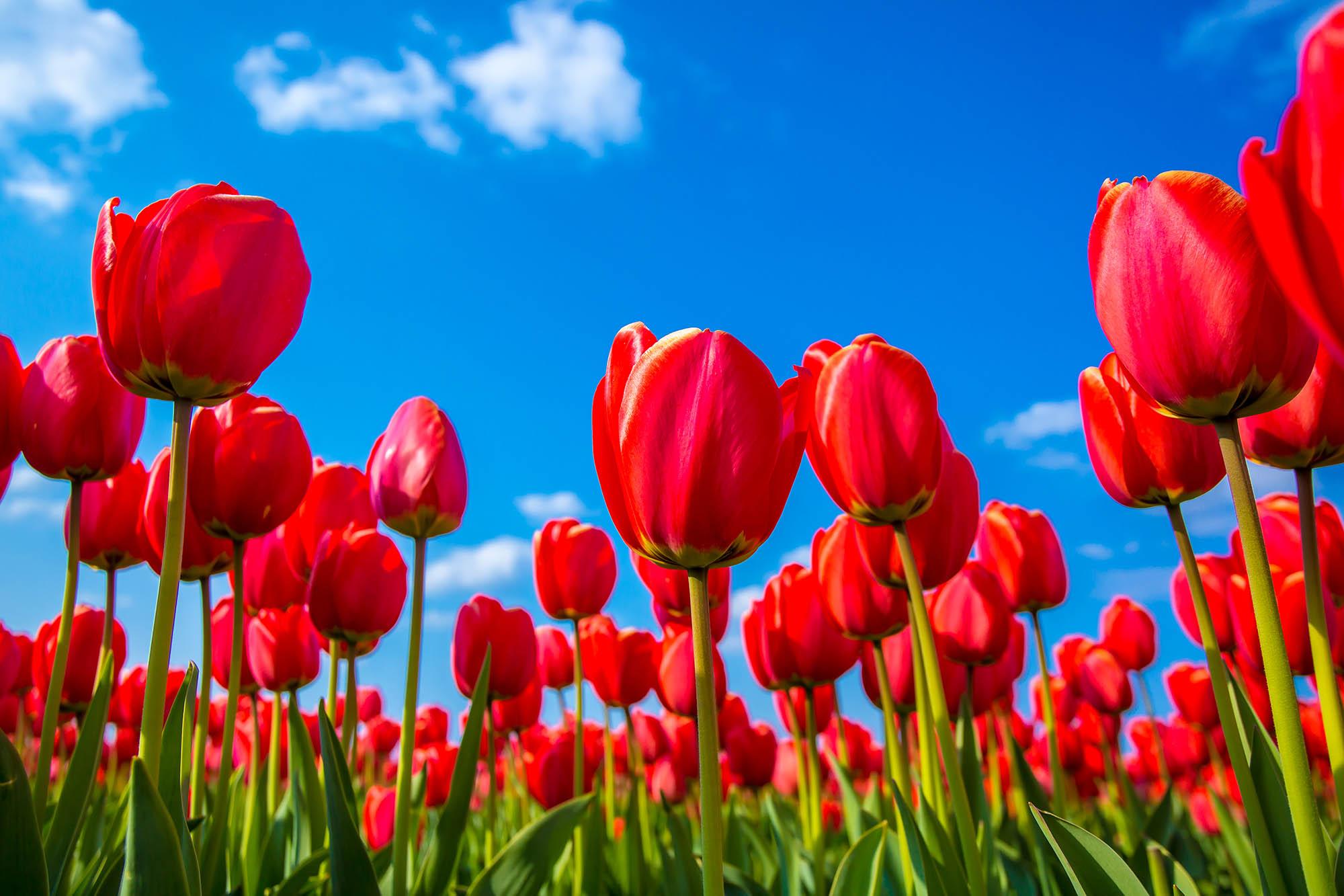Angiosperms -- flower plants