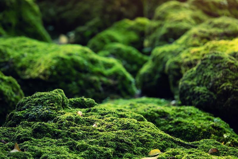 green moss bryophytes plant group