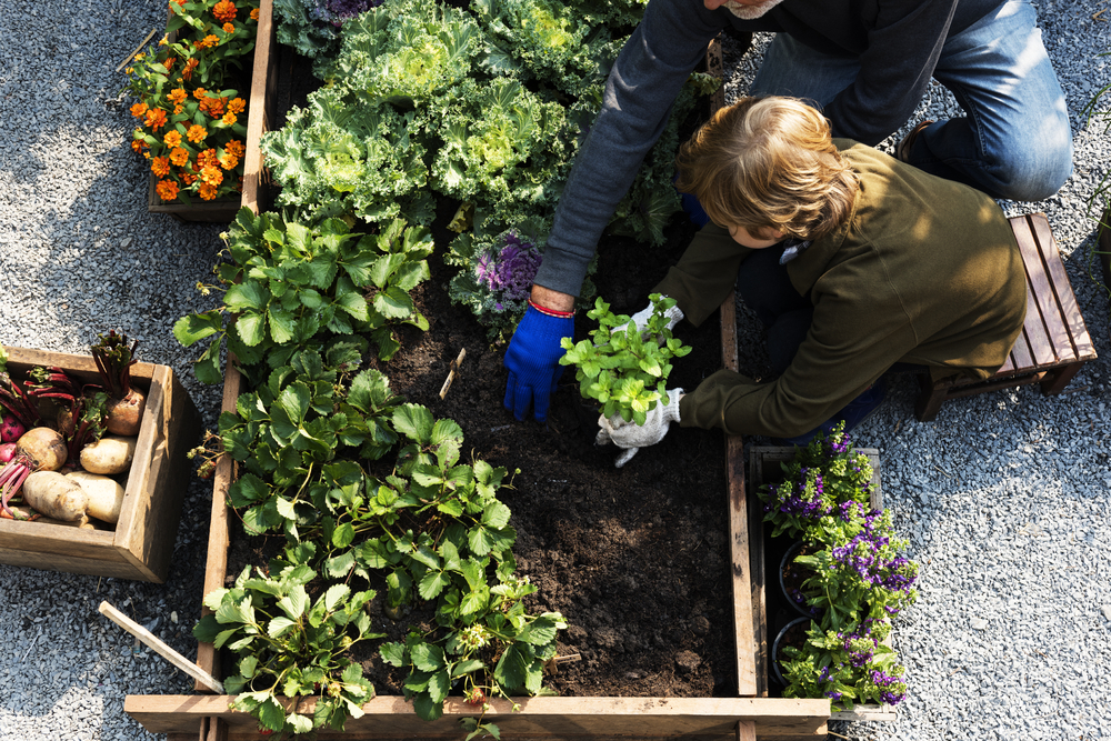Perennial Vegetables to Grow in North America