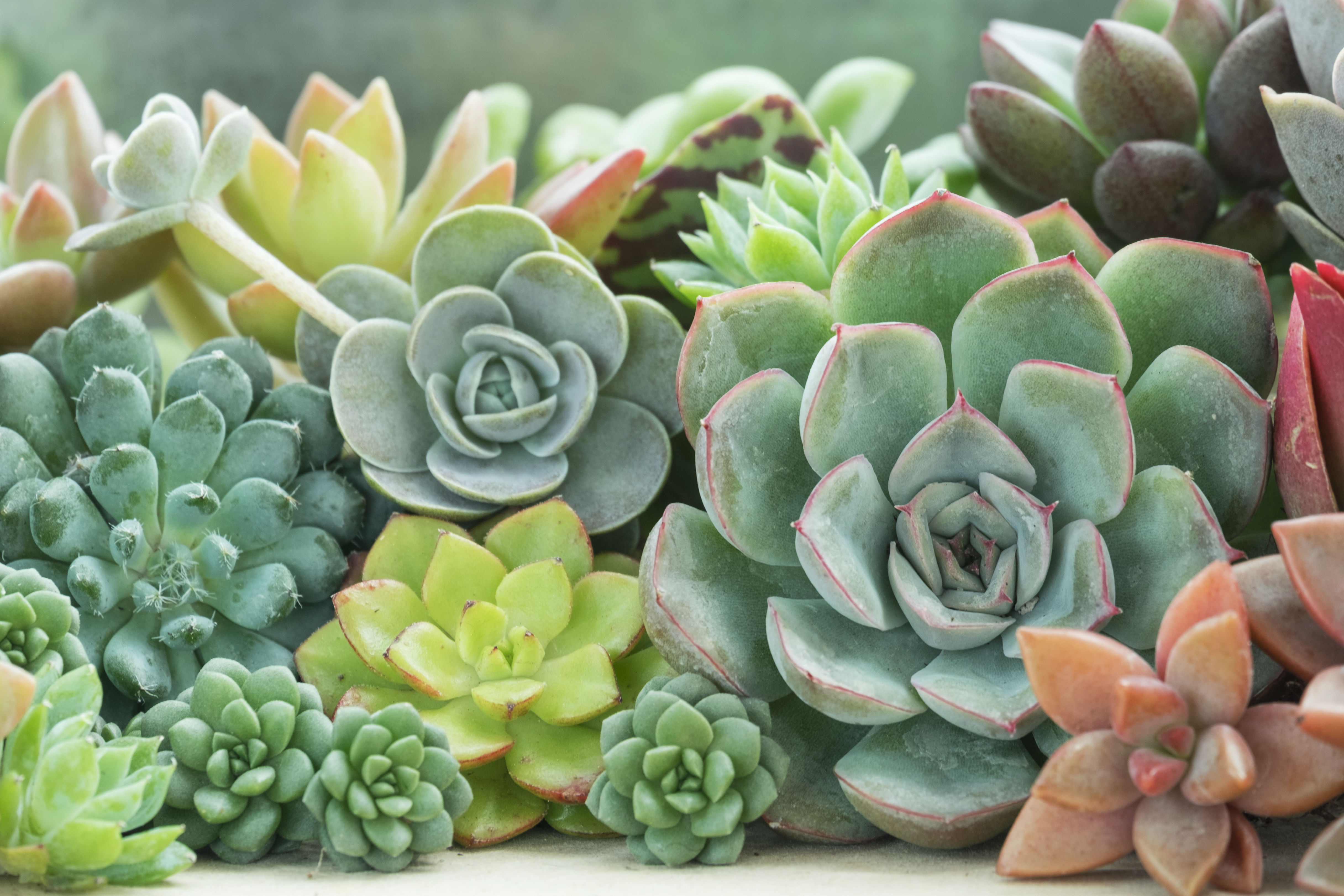 100 Different Types of Succulent Plants (and Species)