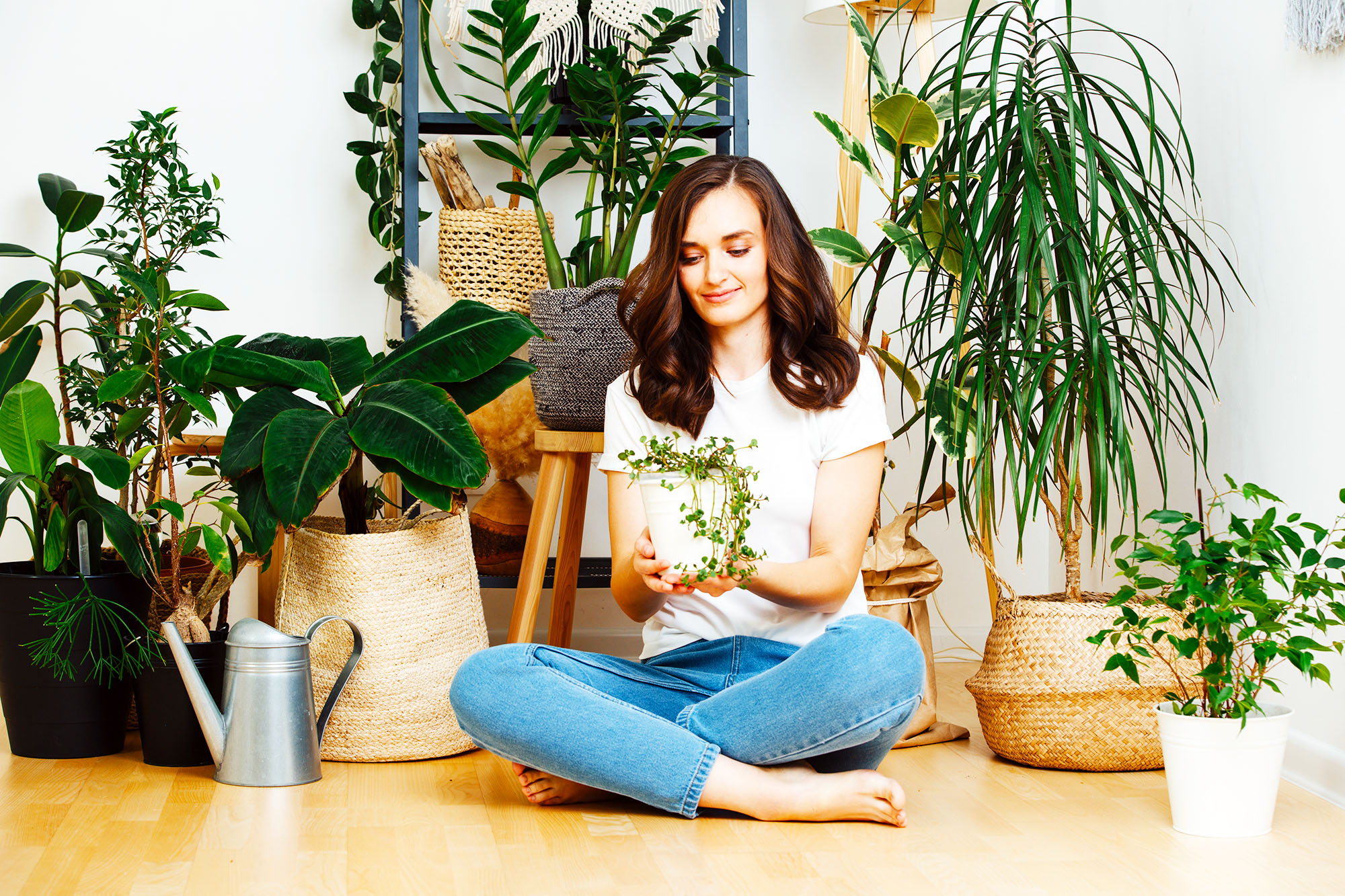 best plants indoor air quality