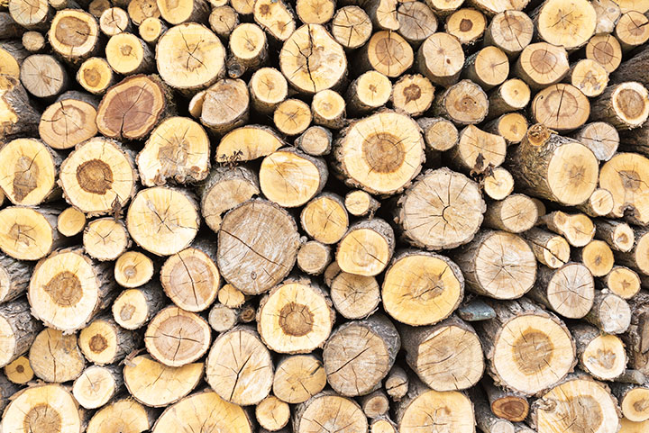 wood logs angiosperms plant group