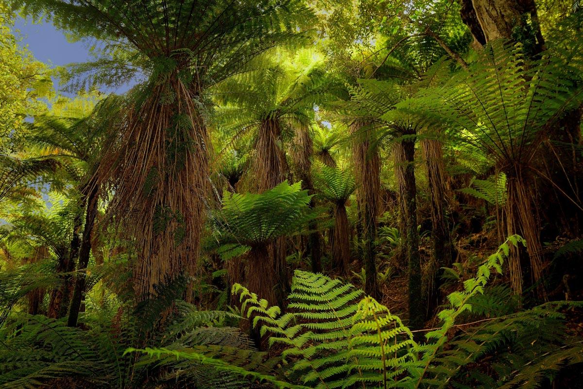 PlantSnap Loves Australia and New Zealand!