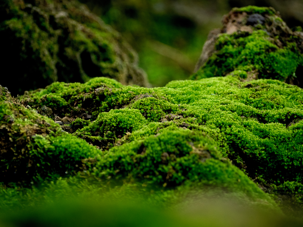 30+ Different Types of Moss (And Most Common Moss Species)