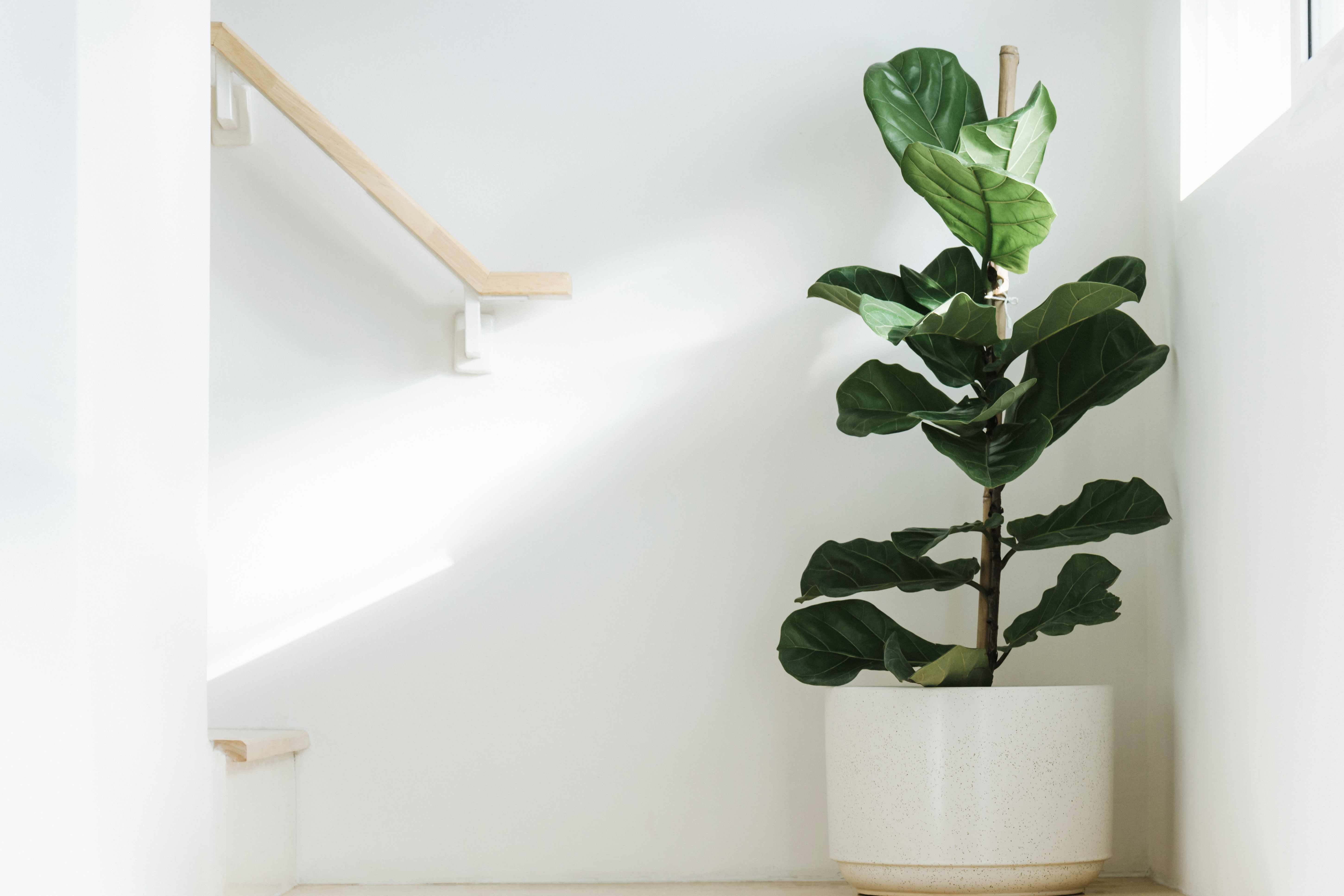 Most Popular Houseplants